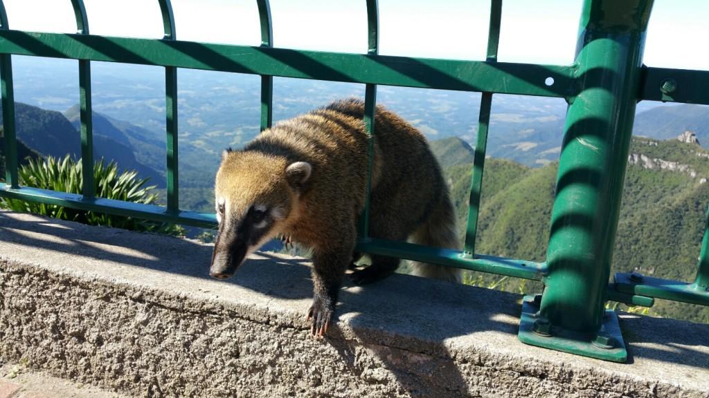 7 Mirante da Serra do Rio do Rastro - viajando em 3.. 2.. 1.. - quati
