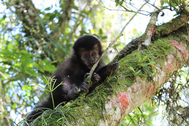 4-Viajando-em-3-2-1-Parque-ecologico-de-maracajá-santa-catarina-informações