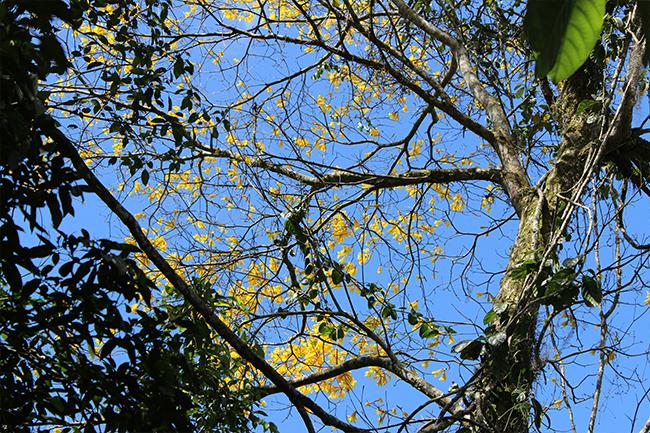6-Viajando-em-3-2-1-Parque-ecologico-de-maracajá-santa-catarina-informações