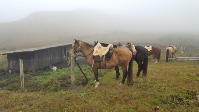 7-blog-viajando-em-321-cavalgada-romaria-nossa-senhora-do-perpetuo-socorro-santa-barbara-bom-jardim-da-serra-santa-catarina